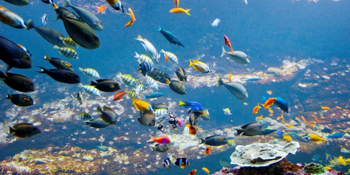 Aquarium Biarritz - Scolaire