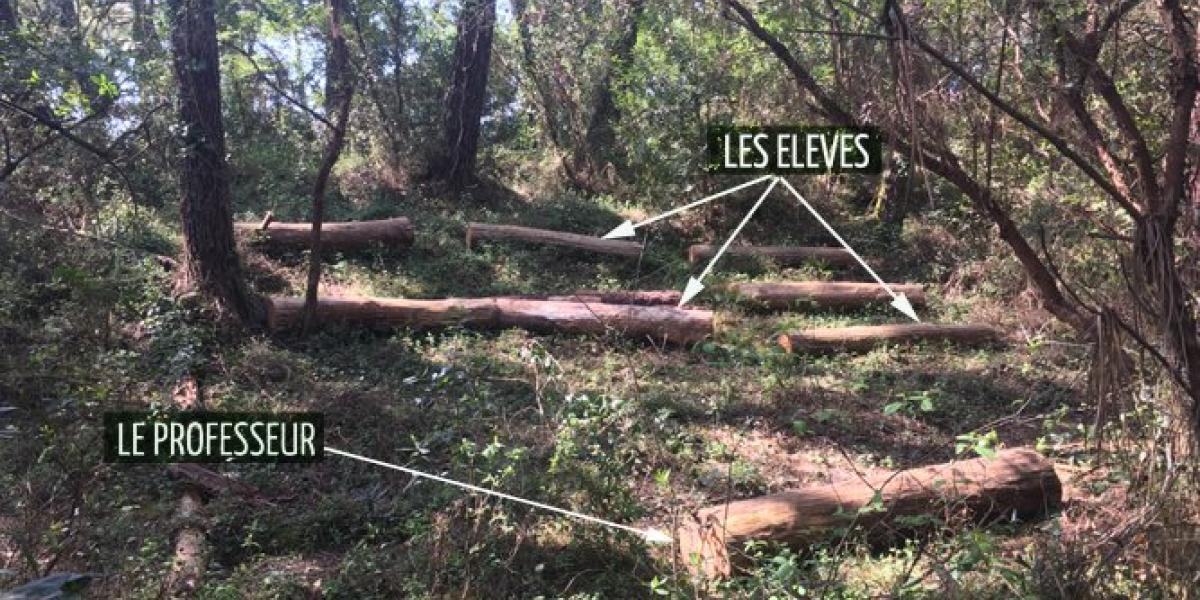 Découverte de la Forêt Mai/Juin